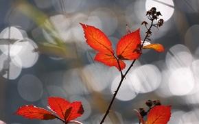 Picture leaves, light, glare, briar, orange