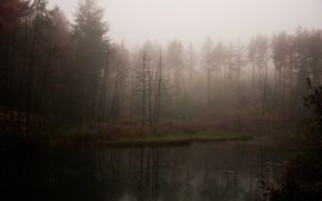 Picture forest, fog, lake, gloomy, atmospheric