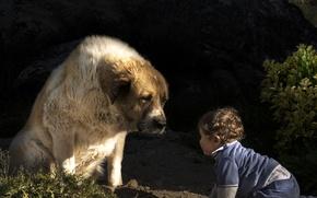 Picture background, dog, boy