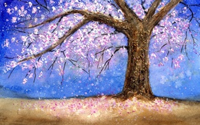 Picture tree, tree, cherry blossom, cherry blossoms