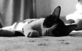 Wallpaper kitty, kitty, black and white