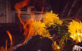 Picture flowers, nature, fire, still life