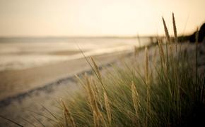 Picture sand, sea, greens, beach, macro, background, widescreen, Wallpaper, blur, wallpaper, ears, widescreen, background, full screen, …