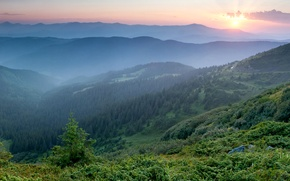 Picture morning, mountains, fog, Ukraine, dawn, Carpathians, forest