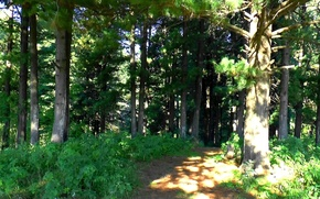 Picture road, forest, summer, glade, cedars, Taiga