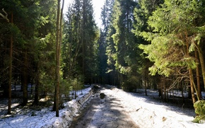 Wallpaper ate, snow, tree, nature, road, Spring, forest