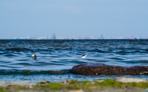 Picture sea, seagulls, Bay, Finnish, Petersburg