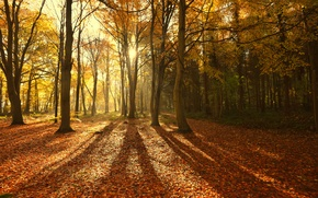 Picture autumn, forest, the sun, rays, light, trees, nature, foliage, shadows