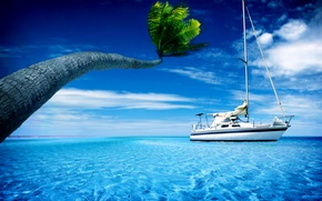 Picture summer, the sky, water, Palma, palm trees, boat, heat, yachts, boats, yacht, widescreen Wallpaper, the ...
