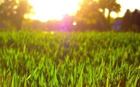 Picture greens, flower, grass, the sun, macro, flowers, background, pink, widescreen, Wallpaper, petals, meadow, wallpaper, flower, …