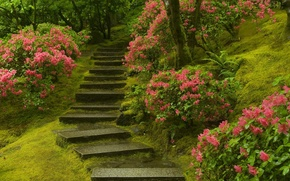 Picture plants, ladder, Japanese garden