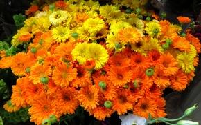 Picture nature, bouquet, petals