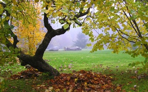 Picture leaves, fog, tree, Autumn, falling leaves, trees, nature, autumn, leaves, fog, fall
