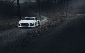 Picture Audi, Road, V10, More, Forest, R8