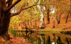 Picture autumn, forest, trees, nature, river, foliage