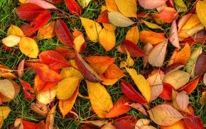Picture autumn, grass, leaves, texture, the crimson