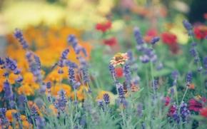 Picture summer, flowers, blur