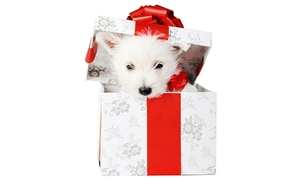 Picture bow, new year, white background, white, Wallpaper from lolita777, holiday, gift, box, puppy, red, animals, …