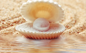 Picture sand, water, shell, umzug