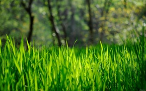 Picture forest, grass, the sun, trees