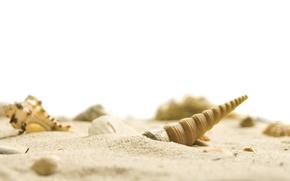 Picture white, beach, sky, sea, nature, sand, shells