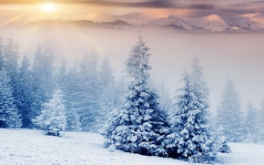 Picture winter, forest, the sun, rays, snow, landscape, mountains, nature, fog, tops, tale, treatment, ate, herringbone, ...