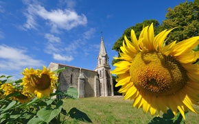 Picture summer, grass, sunflowers, flowers, nature, old, Church, temple, summer, grass, nature, flowers, old, sunflowers, church, …