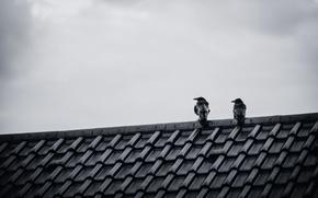 Wallpaper roof, the sky, birds