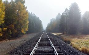 Picture road, autumn, fog