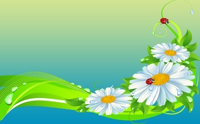 Picture flowers, collage, ladybug, Daisy, insect