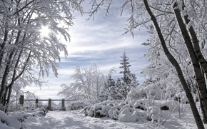 Picture for Lita, winter landscape, romance winter, snow covered trees