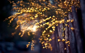 Picture macro, nature, tree, branch, the fence, nature, macro, tree, fence, branches