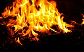 Picture fire, flame, the fire, log
