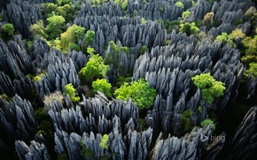 Picture trees, rocks, Madagascar, Tsingy de Bemaraha National Park