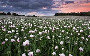 Picture field, nature, Maki