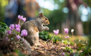 Picture summer, leaves, flowers, nature, animal, protein, rodent, cyclamen