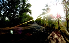 Picture road, the sun, trees, the evening