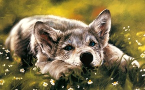Picture look, wolf, dog, lies, longing