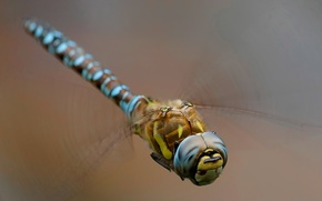 Picture macro, background, wings, dragonfly, insect