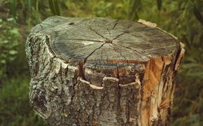Picture bark, Stump