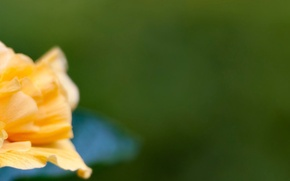 Picture flower, yellow, flower, triple, multi, screen, monitor, 5760x1080
