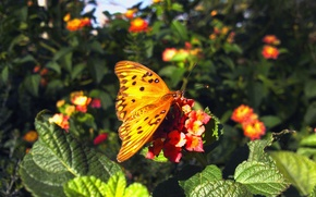 Picture flowers, colors, Butterfly, butterfly, flowers, Green leaves, Green leaves
