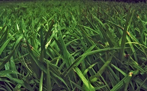 Wallpaper nature, stems, greens, grass, leaves