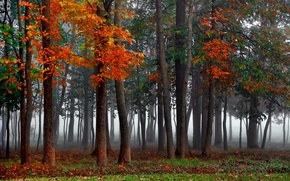 Picture forest, autumn, mist