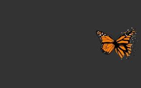 Wallpaper minimalism, grey, butterfly