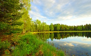 Picture forest, the sky, clouds, trees, lake, pond, river