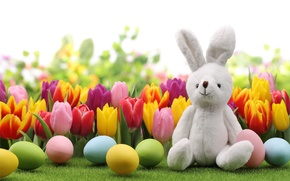 Picture eggs, rabbit, Easter, tulips, flowers, tulips, spring, Easter, eggs, bunny