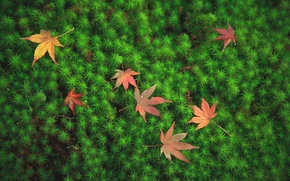 Picture leaves, macro, moss