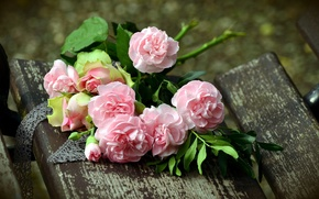 Wallpaper clove, background, roses, bouquet
