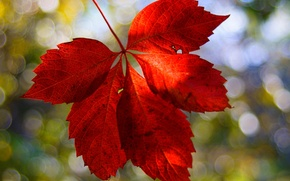 Wallpaper macro, red, background, Wallpaper, blur, leaf, wallpaper, leaf, widescreen, background, full screen, HD wallpapers, widescreen